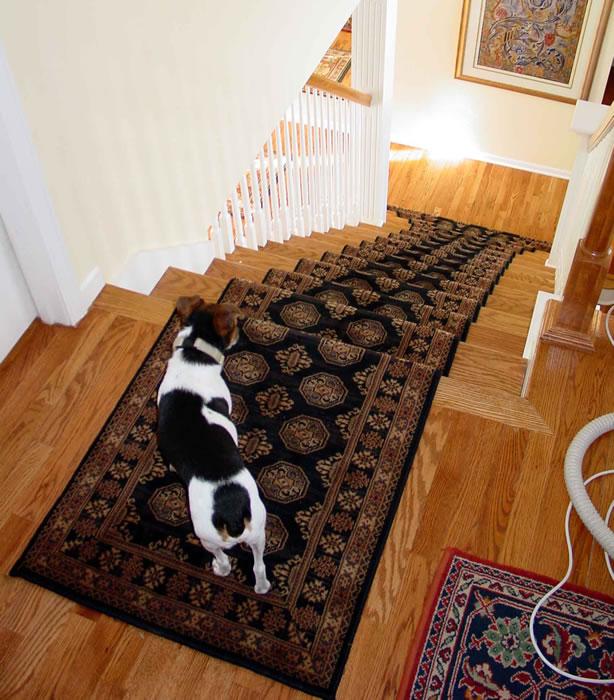 Rug Runner For Dogs: Dog Needs Runner For Stairs